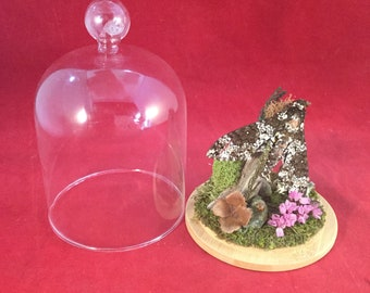 Z-6 Entomology taxidermy Sphinx Moth Antique Victorian Style Glass Dome Display specimen collectible