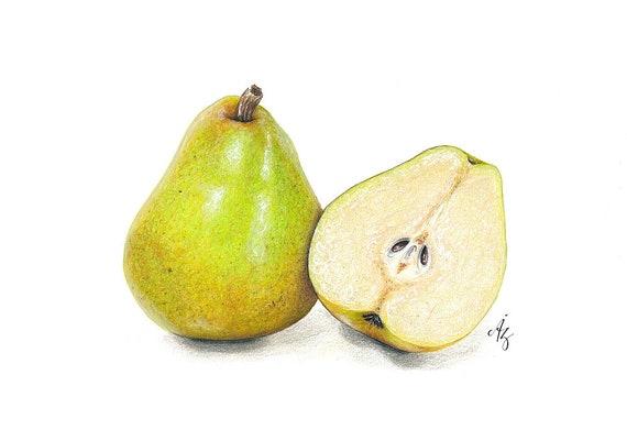 Pear Art Print Pear Pears Realistic Art Wall Decor