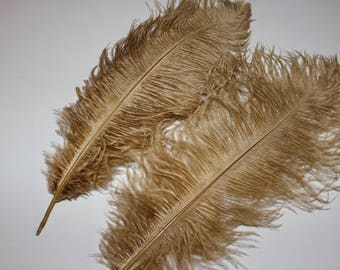 Five ( 5 ) old gold drabs first grade ostrich feathers 37-42cm