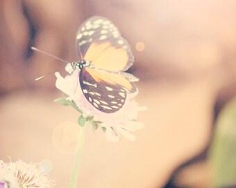 Soft Spring Butterfly - 8x10 photograph - fine art print - nature - nursery art - flora bella