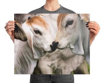 Brahman Calves Photo paper poster