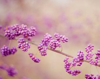 Nature Print, Purple, Purple Berries, Nature Photography, Berry Photo, Home Decor, Nature, Tree Photo, Purple, Warm Tones Print, Dreamy Art