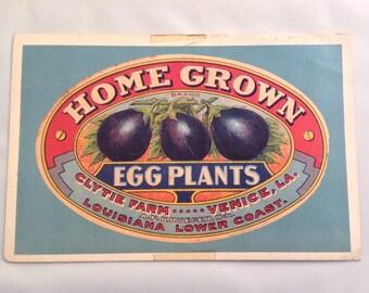 Vintage Postcard Fruit Vegetable Kitchen Epherma Eggplant