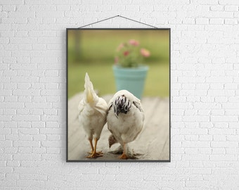 Spring Easter  Animal Photography Two White Hens on the Porch   Chicken  Portrait French Country