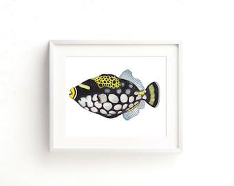 Trigger Fish Watercolor Fine Art Print