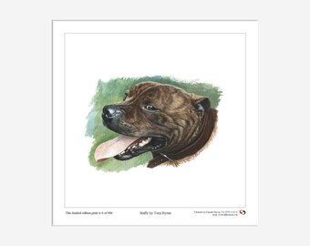 Staffy, Staffordshire Bull Terrier, Dog, Canine, Ltd Edition Print, Tony Byrne