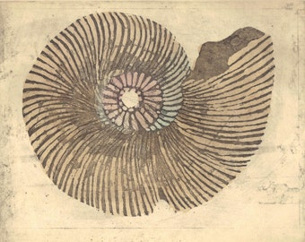 Nautilus Shell /etching