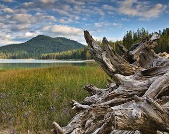 Lakeside: Late Afternoon at Bass Lake, 9x14 Photograph