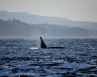 Whale Art Photo, Blue Wall Art, Nature Photography, Animal Photography, Pacific Northwest, Marine Life West Coast, Killer Whale, Nautical