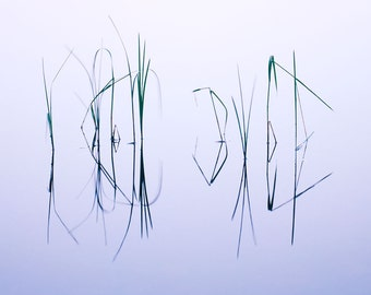 Grass Reflections matted fine art archival print