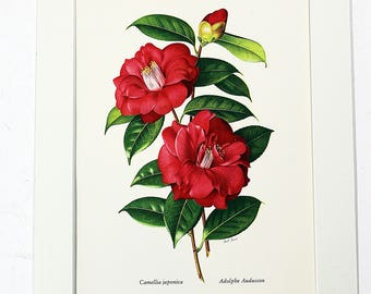 Matting for the Camellia Prints