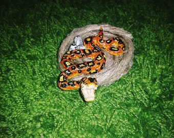 Snake with its eggs