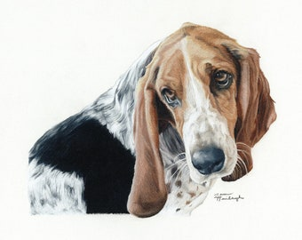 Print of Basset Hound Drawing