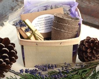 Lavender Garden Kit, Heirloom Lavender Seeds, DIY Lavender Garden, Great Gift for Mom, Grow Your Own Organic Lavender, Gardening Gift