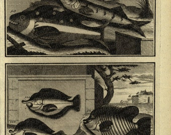 1725 Very Rare Antique Original Engraving of Ambon Islands fish of Indonesia
