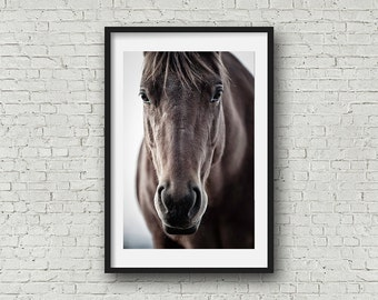 Horse Photography Horse Art