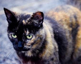 "Animal Photography, ""The Pretty Kitty"" Print Cat Farm Wall Art Prints"