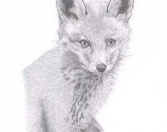 FOX (1)  Limited Edition art drawing print signed by UK artist
