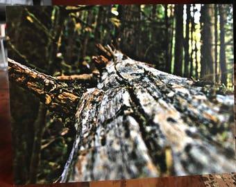 Fallen Tree Note Card