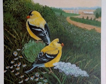 """Goldfinches in Queen Anne Lace, PRINT of my original painting, unframed. 11x17"""", Don Reardon"""