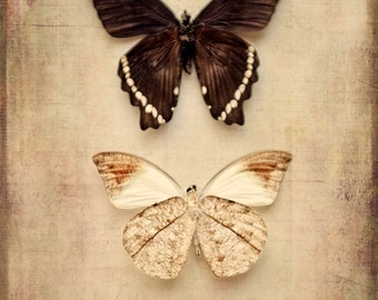 butterflies underbelly sepia insect PRINT ONLY nature bathroom decor home decor nursery decor