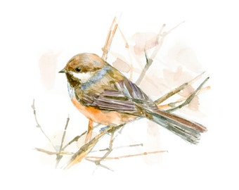 Poecile hudsonicus watercolor painting - bird watercolor painting - 5x7 inch print - 0087