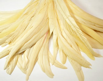 Magnifica Rooster Tail Feathers - Handpicked, Beige/Champaign/Ivory (10pcs)