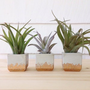 Modern planter | Etsy