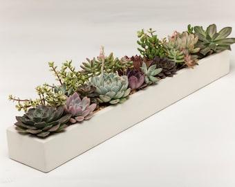 Concrete Planter, Succulent Planter, Planter, Concrete,  Large Planter, Cactus Planter, 3 colors to choose. White, Natural, Carbon