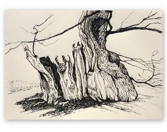 Ink drawing, 'Ancient oak, Chatsworth', veteran oak, tree drawing, winter, pen and ink, 11x16 inches