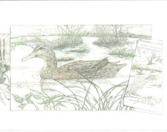 Mallard Hen with Field Sketch