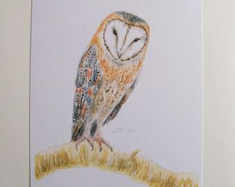 Barn Owl, art print, wildlife print, watercolour print.