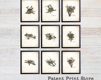 Bird Nest Print Set. Bird Prints. Bird Egg Prints. Wall Art. Living Room Wall Art. Bedroom Art. Dining Room. Audubon Bird Prints. 133