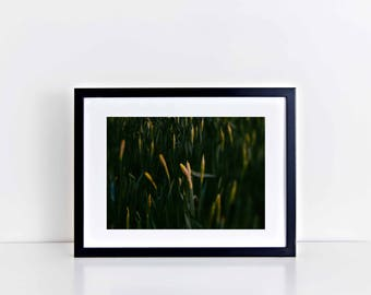 "Fine Art Wall Decor Floral Print: Spring Daffodils (12"" x 10"")"