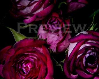 Flowers of Fantasia