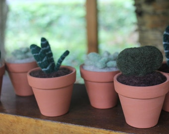 No-Kill Succulents - Woolly, Needle Felted Plants Perfect for Black-Thumbed Gardeners