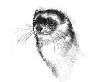 Ferret | Limited edition fine art print from original drawing. Free shipping.