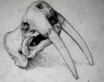 walrus skull print