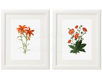 Floral Botanical Print Set, Coral Flowers botanical Prints INSTANT DOWNLOAD Digital Images for Print 5x7, 8x10, 11x14 Included - 2025