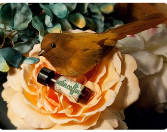 pick your poison today - over 60 aroma options - natural perfume oil -  1/8 oz perfume in apothecary vial