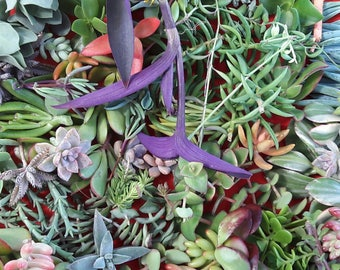 50 Succulent Cuttings DIY
