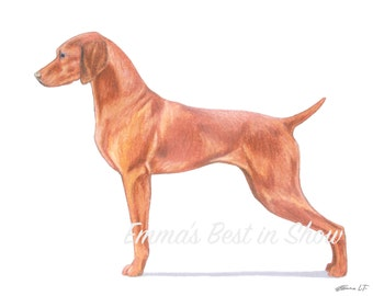 Vizsla Dog - Archival Fine Art Print - AKC Best in Show Champion - Breed Standard - Sporting Group - Original Art Print