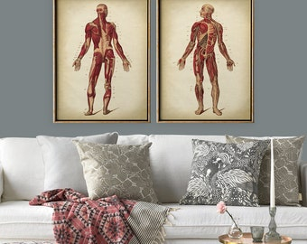 Anatomy print SET of 2, anatomical chart print, muscular system chart, medical print, anatomy room decor, anatomy poster, anatomy wall art