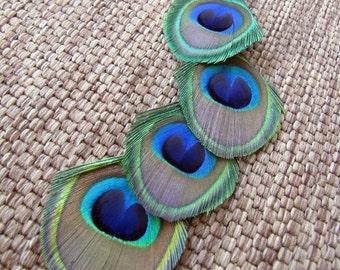 Peacock Feather Earring - Long Single Feather Earring - Cascade