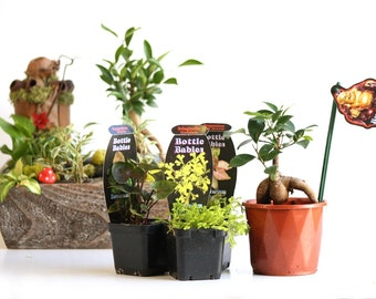 Plant Collection For Fairy Gardens and Terrariums