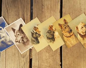 Lot 6 Cartes postales avec chiens peints et photos vintage