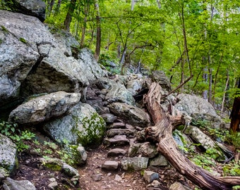 Rocky Path, Photographic Print, Forest Photo, Boulder, Rock Path, Moss, Stairway to Heaven, Vernon, New Jersey, summer photography
