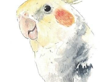 A6 Pet portrait