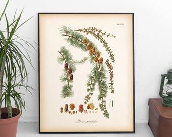 Large printable art, Winter wall art, Conifers, Conifer print, Larch print, Instant download, Botanical print, 8x10, 11x14, 16x20 print