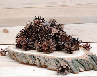 Set of 100 Pine Cones, Natural Pine Cones, Natural Home Decor